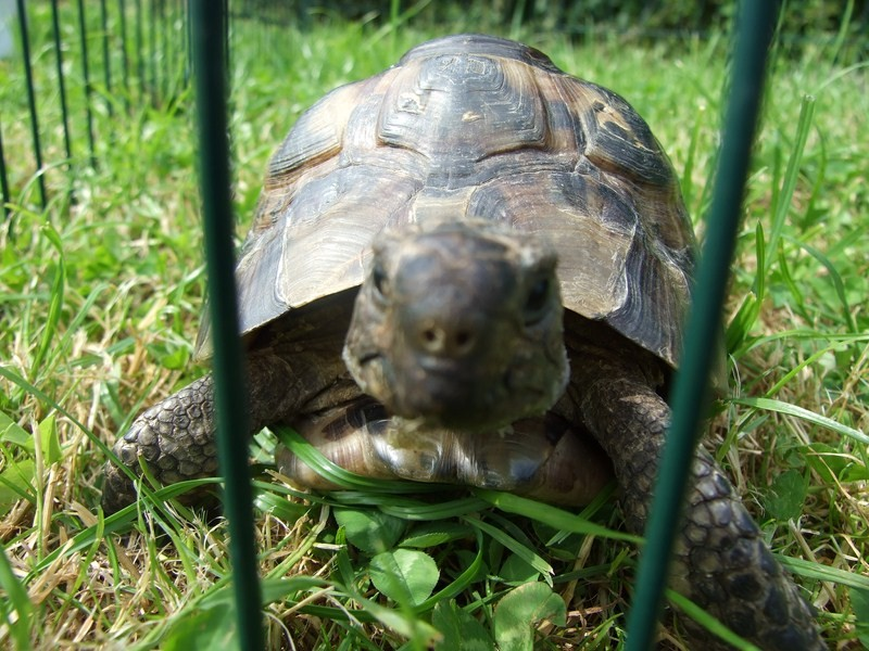 tortoise04
