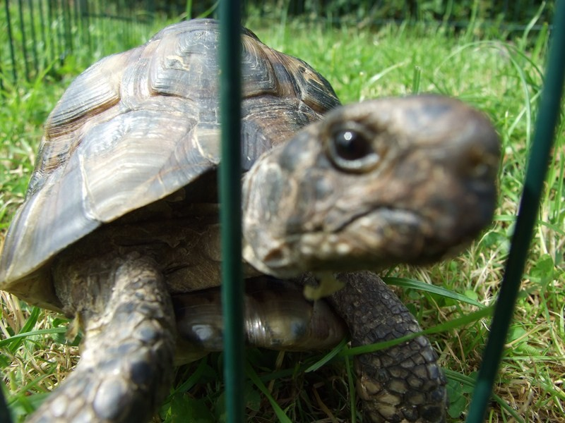 tortoise05