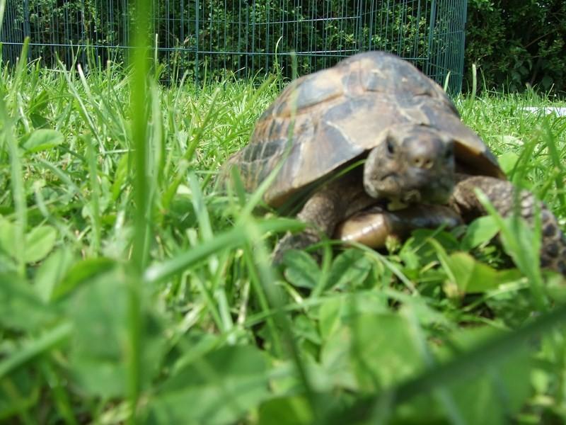 tortoise07
