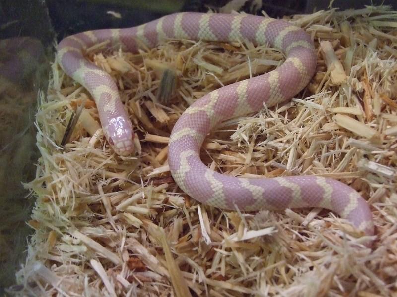 snake002