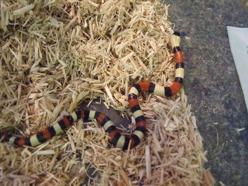 snake009