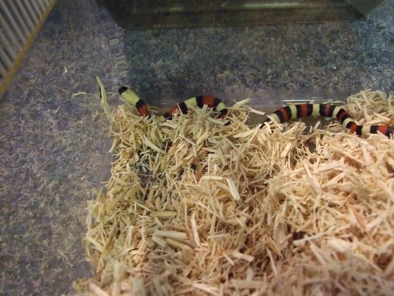 snake010
