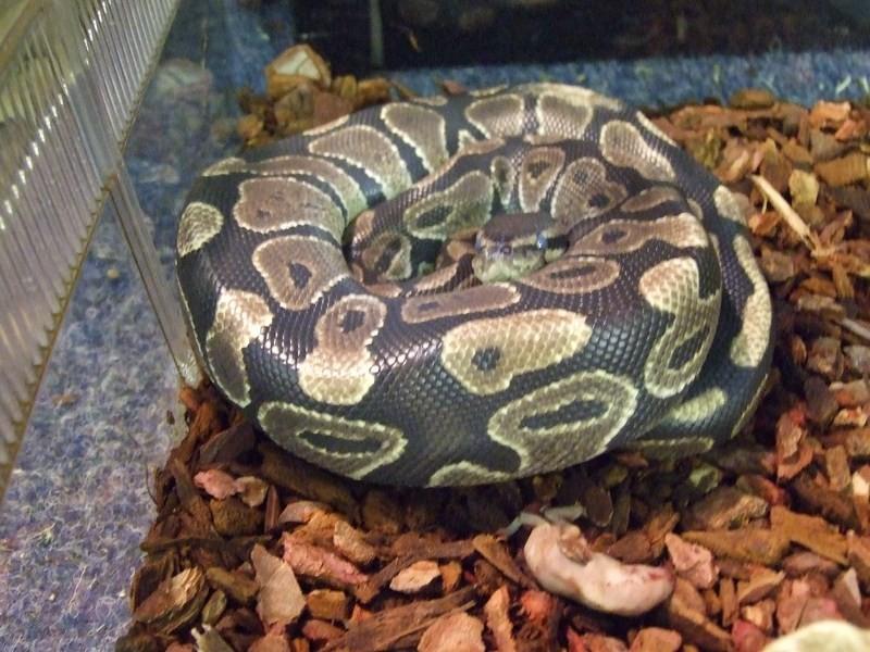 snake014