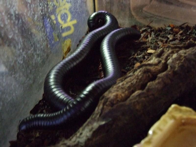 snake016