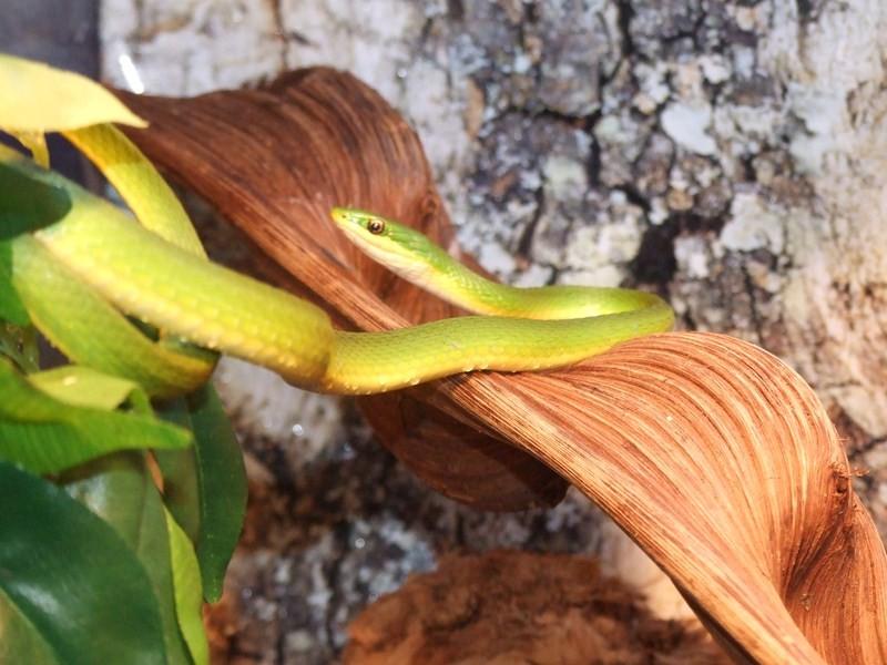 snake017