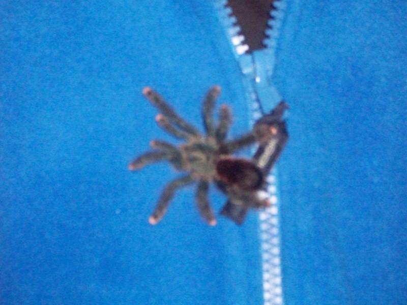 spider003
