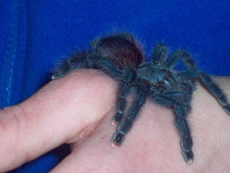 spider004